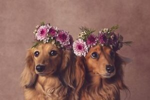 Flower Crowns on Puppies